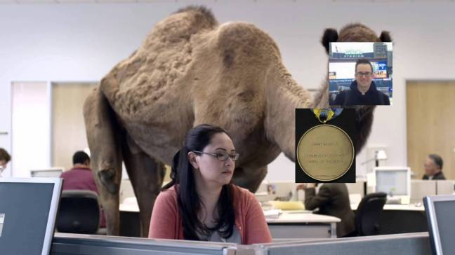 jimmy murphy camel.jpeg