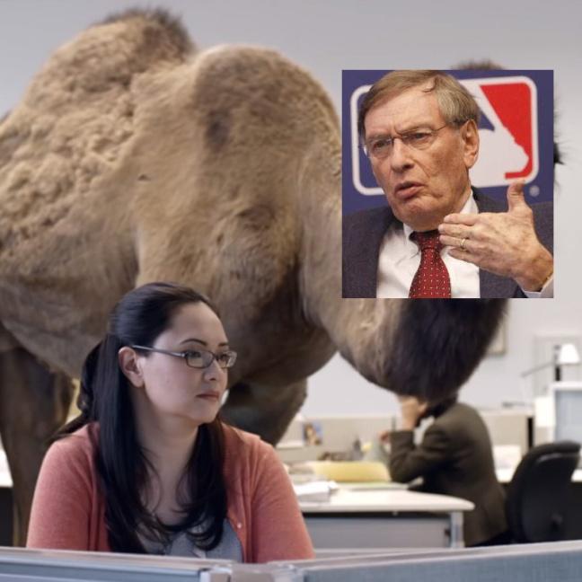selig camel