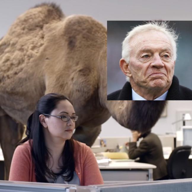 jones camel