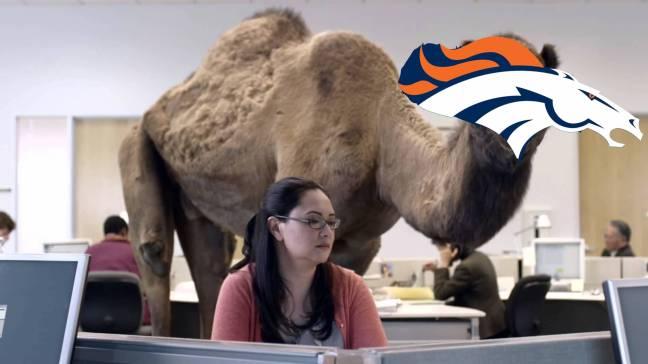 camel-broncos