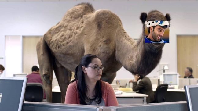 luongo-camel